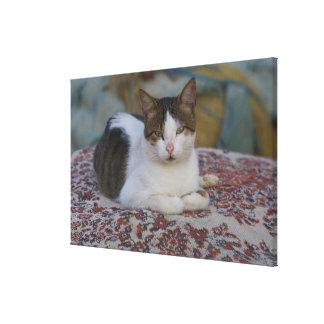 Cat in Marina of Kusadasi along the Aegean Sea, Gallery Wrap Canvas
