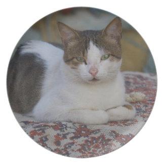 Cat in Marina of Kusadasi along the Aegean Sea, Plate