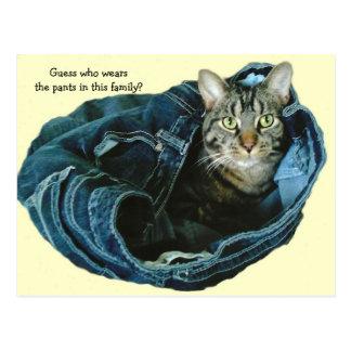 Cat in Pants Postcard