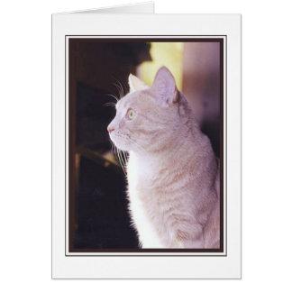 Cat in profile card