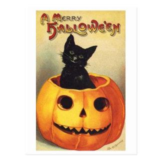 Cat In Pumpkin Postcard
