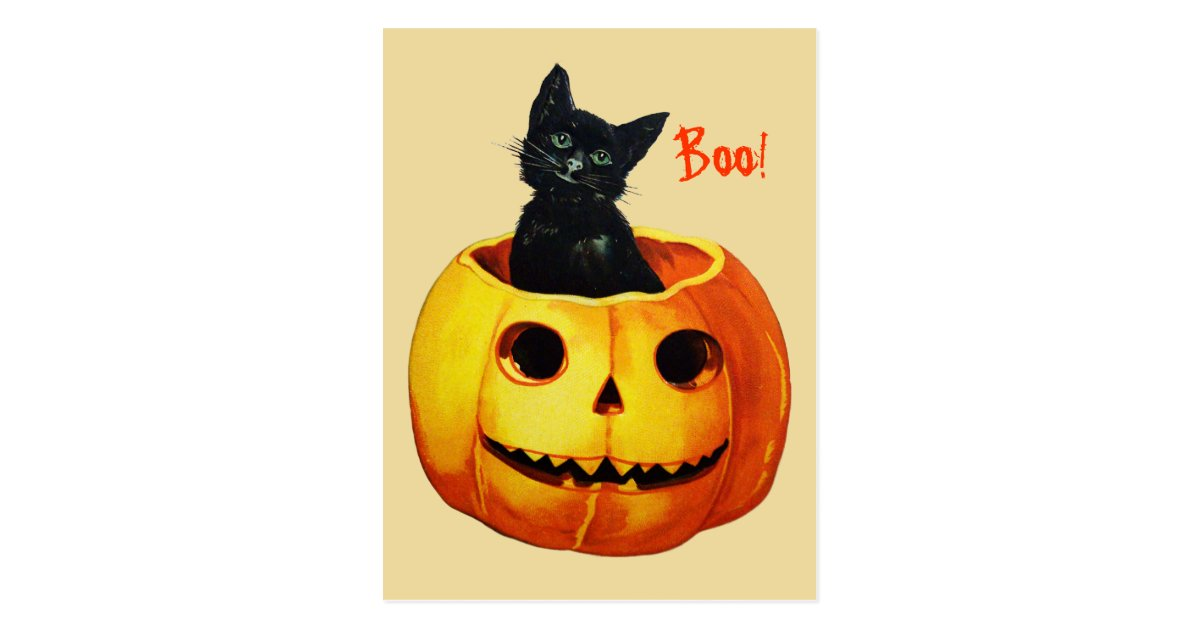 Cat In Pumpkin Vintage Halloween Postcard Zazzle Com