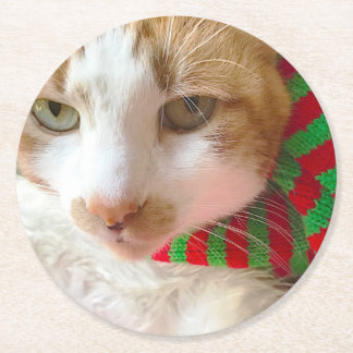 Cat in red and green muffler round paper coaster