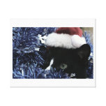 Cat in santa hat hiding in blue tinsel peering out stretched canvas prints