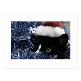 Cat in santa hat hiding in blue tinsel peering out postcard