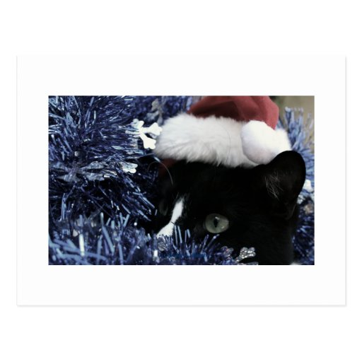 Cat in santa hat hiding in blue tinsel peering out postcard
