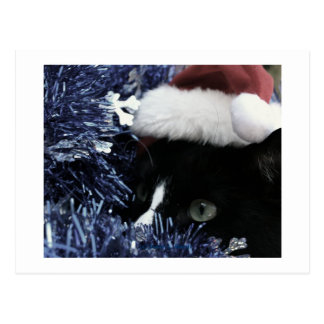 Cat in santa hat hiding in blue tinsel peering out post card