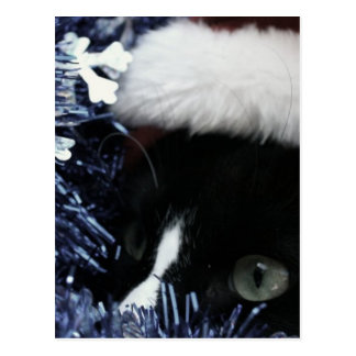Cat in santa hat hiding in blue tinsel peering out post cards