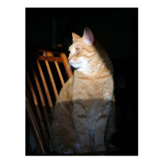 Cat in Shadow Postcards