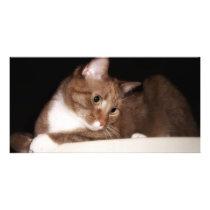 Cat in Soft Light Card