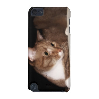 Cat in Soft Light iPod Touch (5th Generation) Covers
