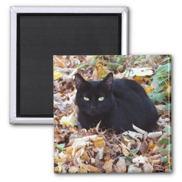 Halloween Themed Cat in the autumn leaves 5.1 Cm Square Magnet