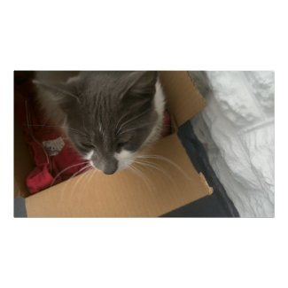 Cat in the Box Poster