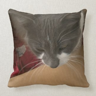 Cat in the Box Throw Pillow