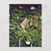 Cat in the Christmas tree Holiday Postcard