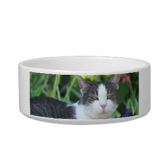 Cat in the garden bowl
