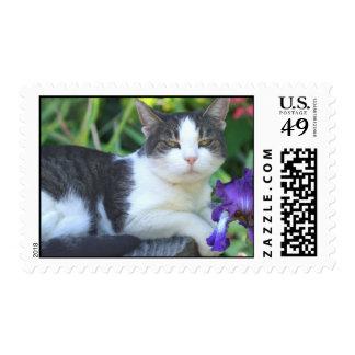 Cat in the garden postage