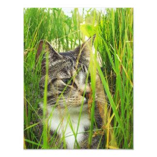 Cat in the Grass Invitation