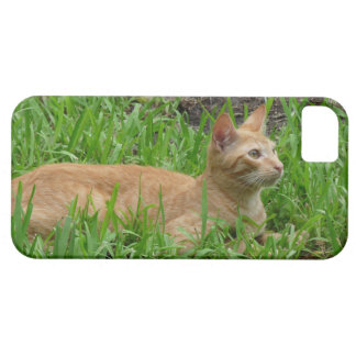 Cat in the green grass iPhone SE/5/5s case