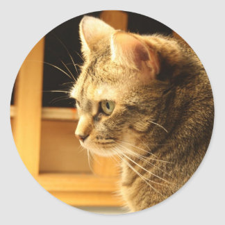 Cat in the light classic round sticker