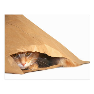 Cat in the sack postcard