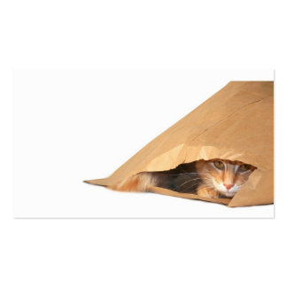 Cat in the sack profile card