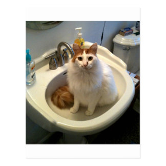 Cat in the Sink Postcard