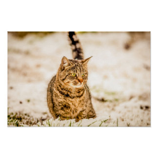 Cat in the snow beautiful nature scenery poster