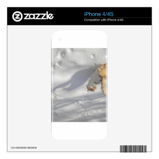 cat in the snow skin for iPhone 4