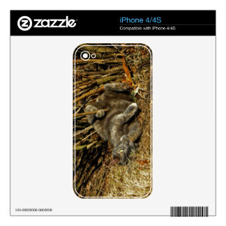 Cat in the Sticks Phone Skin Skin For The iPhone 4