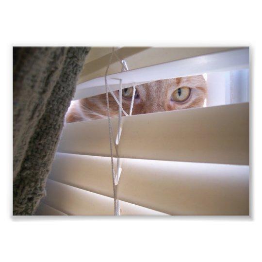 Cat in the Window Photo Print