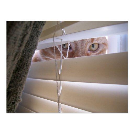 Cat in the Window Postcard