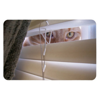 Cat in the Window Rectangle Magnets