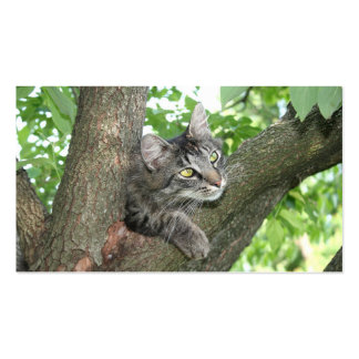 Cat in tree business cards