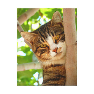Cat in Tree Canvas Print
