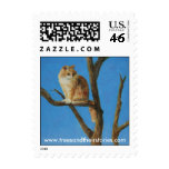 Cat in Tree-watching Stamps