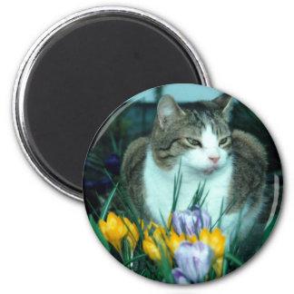 Cat in Tulips 2 Inch Round Magnet