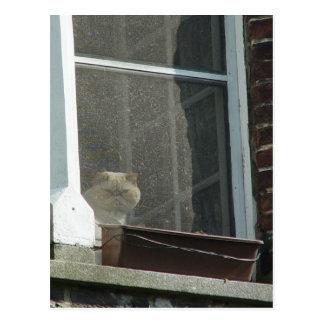 Cat in Window Postcard
