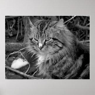 Cat in Winter Black/White Portrait Print Poster