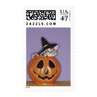 Cat in witch hat inside pumpkin postage