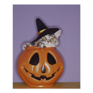Cat in witch hat inside pumpkin poster