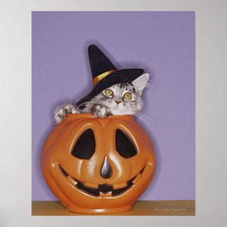 Cat in witch hat inside pumpkin poster