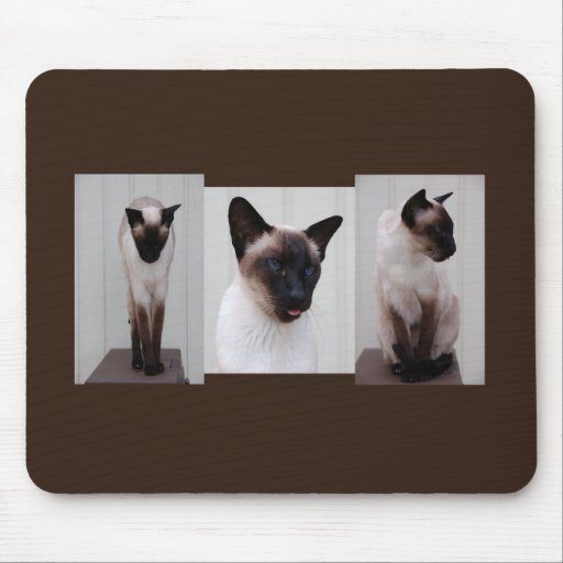Cat 'Inoe' tryptich Mouse Pad