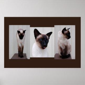 Cat 'Inoe' tryptich Poster