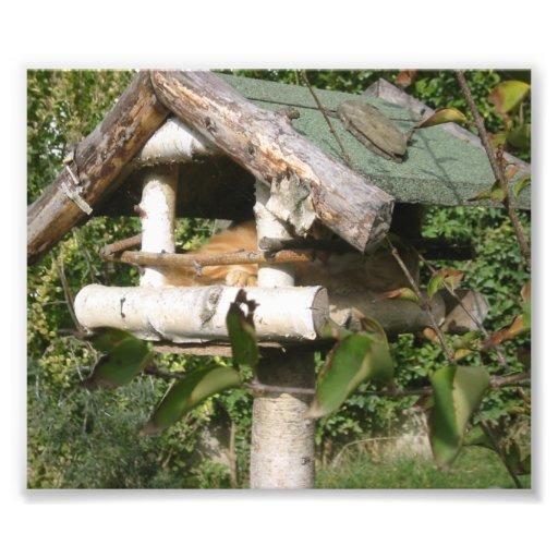 Cat inside a birds wooden nest photo print