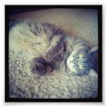 Cat-Instagram Photo Print