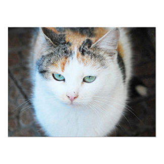 "Cat 6.5"" X 8.75"" Invitation Card"