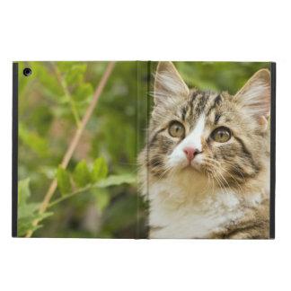 Cat Case For iPad Air