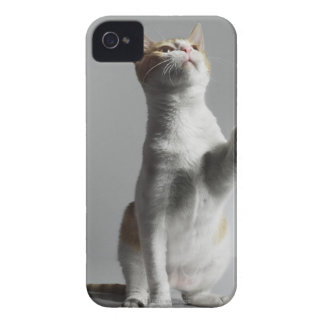 cat iPhone 4 case