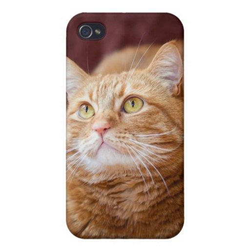 Cat iPhone 4 Cases